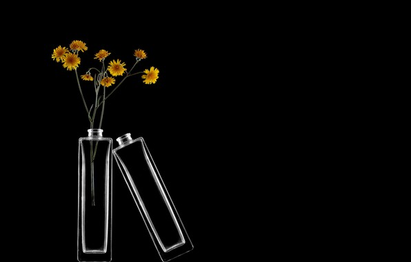Картинка цветы, фон, банки