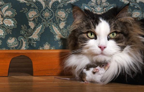 Картинка кошка, глаза, кот, взгляд, морда, крупный план, уют, дом, фон, стена, обои, узор, вместе, доброта, …