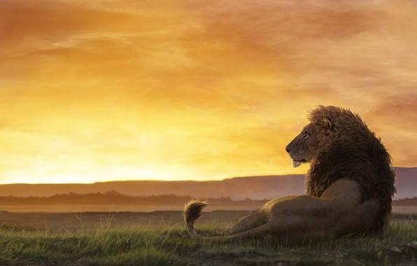 Картинка Закат, Солнце, Рисунок, Кот, Лев, Африка, Хищник, Грива, Арт, Art, Predator, Sun, Sunset, Cat, Lion, …