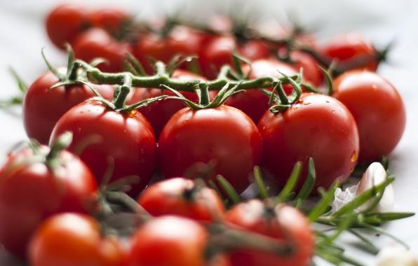 Картинка капли, еда, размытие, белый фон, овощи, помидоры, много, на ветке, томаты, помидорки