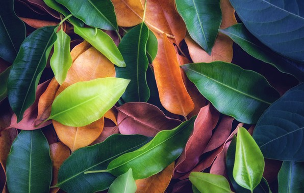 Картинка листья, фон, colorful, texture, background, leaves
