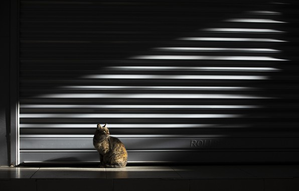 Картинка кошка, свет, light, cat, Nazim Tetik
