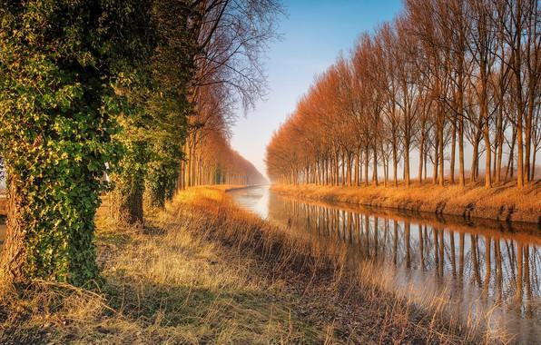 Картинка деревья, природа, озеро