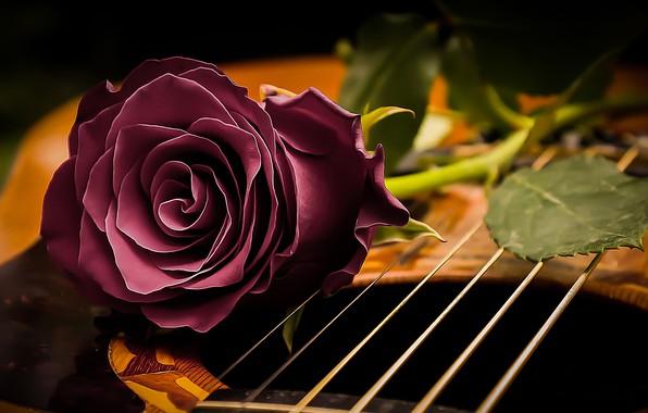 Картинка стиль, настроение, роза, гитара, струны, бутон