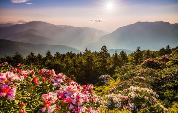 Картинка лес, небо, солнце, лучи, свет, цветы, горы, природа, туман, заросли, холмы, склоны, вершины, красота, весна, ...