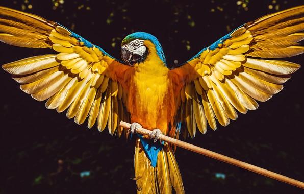 Картинка солнце, фон, птица, крылья, перья, попугай, ара