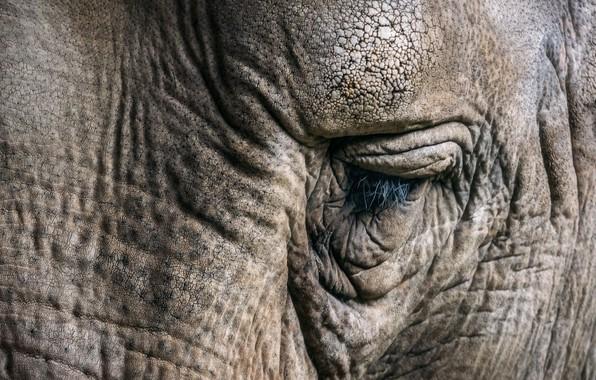 Картинка природа, глаз, слон