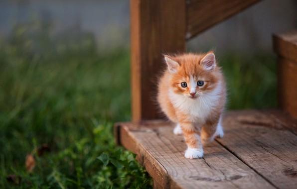 Картинка кошка, трава, взгляд, поза, котенок, фон, доски, малыш, рыжий, лестница, ступени, котёнок