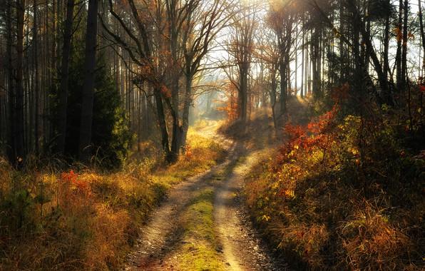 Картинка дорога, лес, деревья, пейзаж, природа, утро, Radoslaw Dranikowski