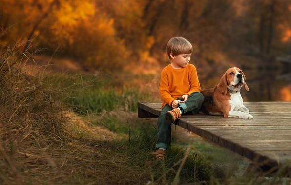 Картинка осень, природа, животное, доски, собака, мальчик, ребёнок, пёс, Екатерина Борисова