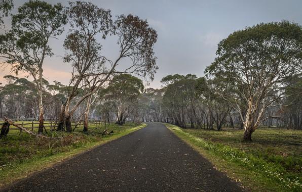 Картинка Australia, New South Wales, Ebor