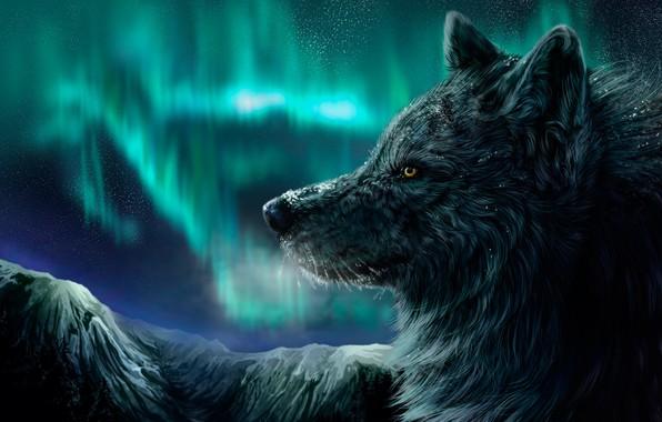Картинка зима, ночь, волк, северное сияние, падает снег