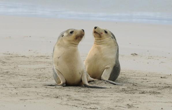 Картинка природа, берег, тюлени