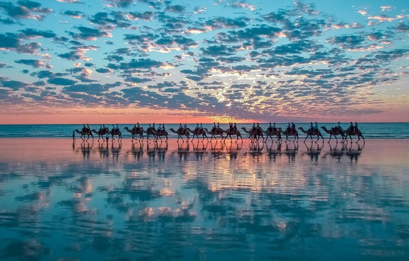 Картинка nature, sunset, water, clouds, mirroring, herd, camels, bedouin