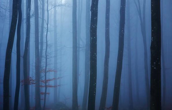 Картинка лес, деревья, туман, forest, trees, fog, Uschi Hermann