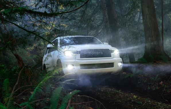 Картинка машина, лес, свет, деревья, фары, оптика, Toyota, Sequoia, полноразмерный внедорожник, TRD Pro