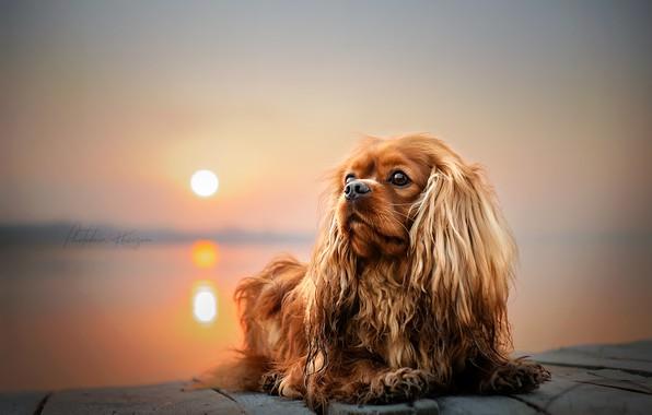 Картинка солнце, закат, природа, животное, собака, пёс, Екатерина Кикоть