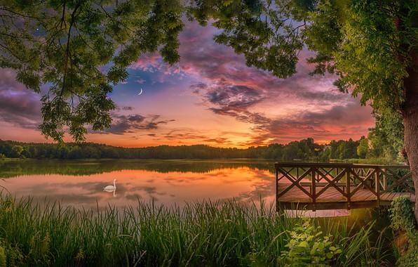 Картинка лето, закат, озеро, дерево, птица, лебедь