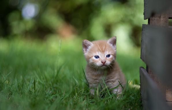 Картинка трава, маленький, малыш, рыжий, котёнок