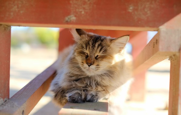 Картинка кошка, свет, фон