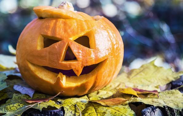 Картинка листья, тыква, Хэллоуин, 31 октября