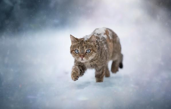 Картинка зима, кошка, снег