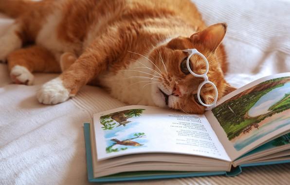 Картинка кот, рыжий, очки, устал, книга