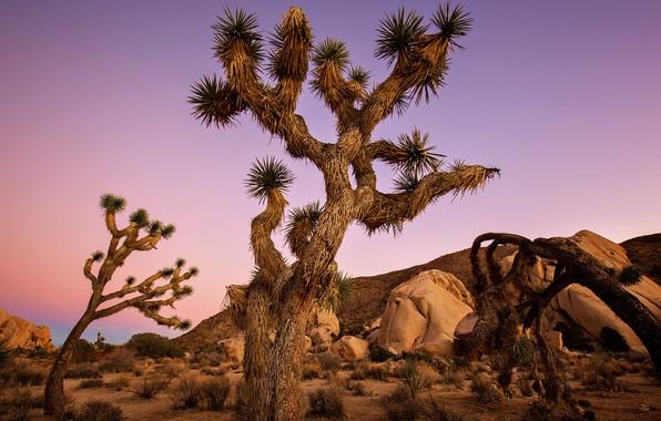 Картинка Калифорния, США, Joshua Tree National Park, Джошуа-Три