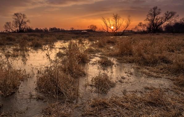 Картинка осень, вода, пейзаж, закат, природа, красота, сухая трава