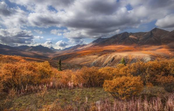 Картинка осень, облака, пейзаж, горы, природа, растительность, долина, Канада, травы, кусты, тундра, Юкон