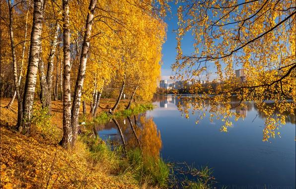Картинка осень, деревья, ветки, отражение, река, Россия, берёзы, Московская область, берёзовая роща, Река Пехорка, Балашиха