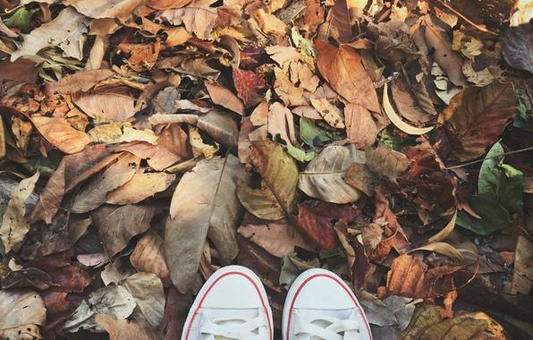 Картинка осень, листья, фон, кеды, colorful, wood, background, autumn, leaves, осенние