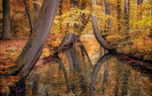 Картинка осень, вода, деревья, пейзаж, природа, парк, отражение, канал