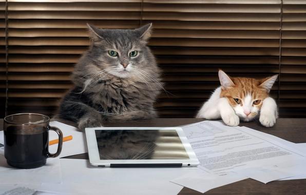 Картинка кошка, кот, взгляд, стол, серый, фон, работа, кофе, лапки, пушистый, рыжий, пара, начальник, офис, кружка, …