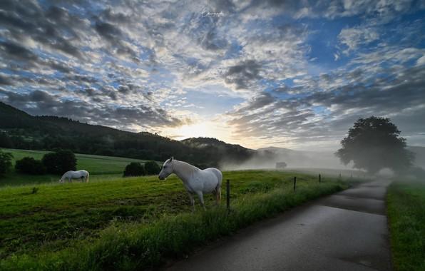 Картинка дорога, туман, кони