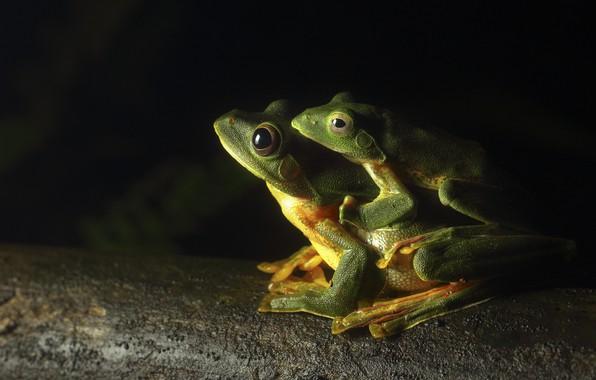 Картинка legs, eyes, greens, frogs, toads