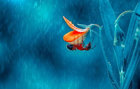 Картинка цветок, фон, ветка, муравей