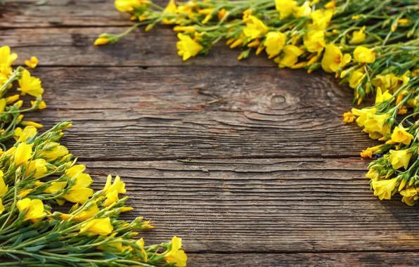 Картинка цветы, доски, желтые, yellow, wood, blossom, flowers, spring