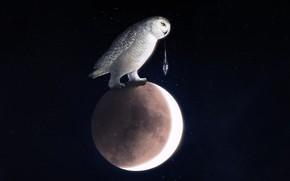 Картинка Сова, Птица, Луна, Космос, Арт, Owl, Into The Bear, by Into The Bear, Cold Moon, …