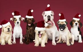 Картинка собака, Новый Год, Рождество, щенок, happy, санта, Christmas, puppy, dog, New Year, cute, Merry, santa …