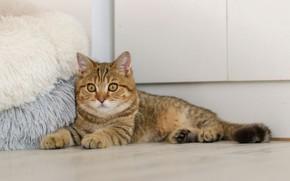 Картинка пуфики, лежит на полу, полосатая кошка