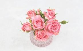 Картинка стол, розы, ваза, розовые, бутоны