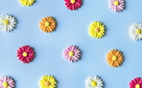 Картинка цветы, фон, голубой, colorful, blue, flowers