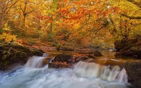 Картинка осень, лес, деревья, река, Англия, водопад, Devon, England, Девон, Dartmoor National Park, Национальный парк Дартмур, …