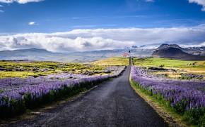 Картинка дорога, облака, пейзаж, цветы, горы, природа, церковь, Исландия, люпины, полуостров, Snæfellsnes, Снайфедльснес