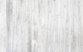Картинка дерево, текстура, деревянный фон, фотофон, белое дерево