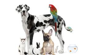 Картинка кот, рыбки, собака, кролик, попугай, далматинец