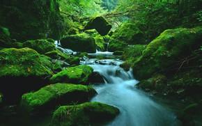 Картинка Поток, Лес, Камни, Стремнина