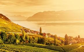 Картинка солнце, горы, озеро, Швейцария, вноградники, Lavaux, Лаво
