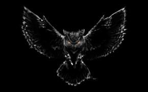 Картинка сова, птица, рисунок, крылья, перья, клюв, арт, когти, черный фон